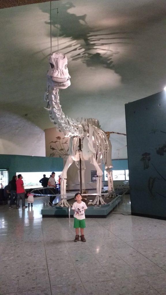 Visitando el Museo de Historia Natural 2